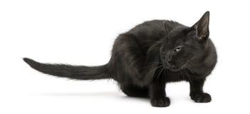 Schwarzes Kätzchenverkratzen, 2 Monate alte lokalisiert auf Weiß stockbilder