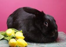 Schwarzes Kaninchen mit gelben Tulpen Lizenzfreie Stockfotos