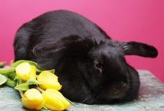 Schwarzes Kaninchen mit gelben Tulpen Stockbild