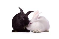 Schwarzes Kaninchen und Weißkaninchen Stockbild