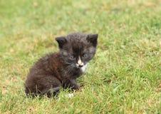 Schwarzes kittie mit blauen Augen Stockfotografie
