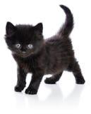 Schwarzes kleines Kätzchen, das oben steht lizenzfreie stockfotos