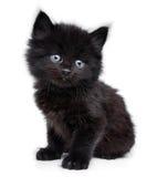 Schwarzes kleines Kätzchen, das sich hinsitzt lizenzfreie stockfotos