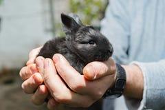 schwarzes kleines Kaninchen in der Hand Lizenzfreies Stockfoto