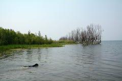 Schwarzes Labrador, das Knochen in einem Fluss jagt Stockfotografie