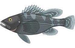 Schwarzes Meer Bass Illustration vektor abbildung