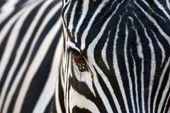 Schwarzes mit weißen Streifen oder Weiß mit schwarzen Streifen Stockfotografie