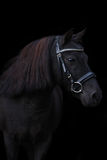 Schwarzes nettes Ponyporträt auf schwarzem Hintergrund Stockbilder