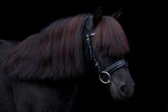 Schwarzes nettes Ponyporträt auf schwarzem Hintergrund Lizenzfreie Stockfotografie