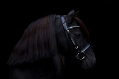 Schwarzes nettes Ponyporträt auf schwarzem Hintergrund Stockbild