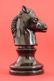 Schwarzes Pferd Stockbild