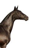 Schwarzes Pferd auf Weiß Stockbilder