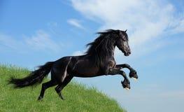 Schwarzes Pferd, das auf dem Feld spielt Stockbild