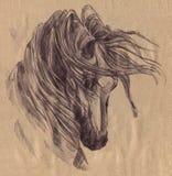 Schwarzes Pferd graphiken Gemalter schwarzer Stift stock abbildung