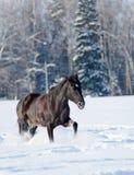 Schwarzes Pferd im Winter Lizenzfreies Stockbild