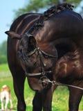 Schwarzes Pferd und Hund Lizenzfreie Stockfotos