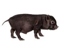 Schwarzes piggy lokalisiert auf Weiß Lizenzfreies Stockbild