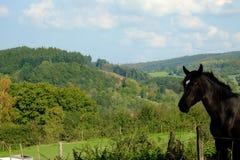 Schwarzes Pony Lizenzfreies Stockfoto