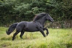 Schwarzes Pony am Galopp Lizenzfreie Stockfotografie