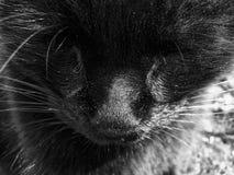 Schwarzes portret Nahaufnahme der Katze Stockbilder