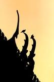 Schwarzes Schattenbild auf Sonnenuntergang Stockbilder