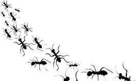 Schwarzes Schattenbild der Ameisen Lizenzfreie Stockbilder