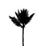 Schwarzes Schattenbild der einzelnen KokosnussPalme lokalisiert auf Weiß Lizenzfreies Stockfoto