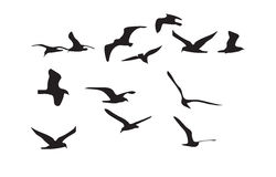 Schwarzes Schattenbild der Seemöwen auf weißem Hintergrund Vektor Stock Abbildung