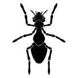 Schwarzes Schattenbild einer Ameise auf einem weißen Hintergrund Stockfotos