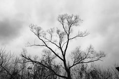 Schwarzes Schattenbild eines Baums lizenzfreie stockfotos