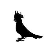 Schwarzes Schattenbild eines großen Kakadupapageien auf einem weißen Hintergrund Stockfoto