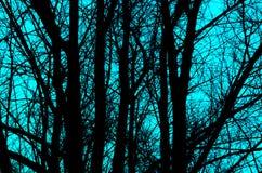Schwarzes Schattenbild von Bäumen auf blauem Hintergrund Abstraktion und Hintergrund Stockfotografie