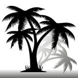 Schwarzes Schattenbild von drei Palmen, mit Schatten auf weißem Hintergrund Lizenzfreie Stockbilder