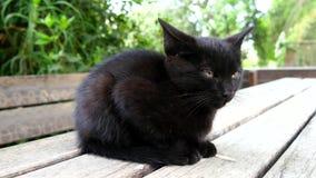 Schwarzes schläfriges Kätzchen auf einer Tabelle (4K) stock footage