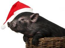 Schwarzes Schwein mit einer roten Sankt-Kappe Stockbild
