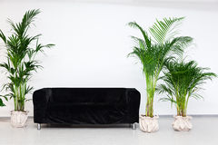 Schwarzes Sofa mit Grünpflanzen Stockfotografie
