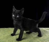 Schwarzes stehendes Kätzchen Stockbild