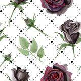 Schwarzes stieg botanische mit Blumenblumen Aquarellhintergrund-Illustrationssatz Nahtloses Hintergrundmuster lizenzfreie abbildung