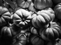 Schwarzes u. weißes Foto von weißen Kürbisen Stockbilder