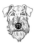 Schwarzes und Porträt des weißen irischen Terriers stockbilder