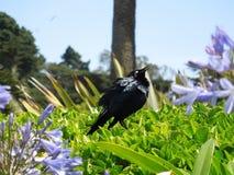 Schwarzes Vogelflattern lizenzfreie stockbilder