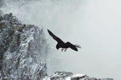 Schwarzes Vogelfliegen zwischen Felsen mit schneebedeckter Spitze in den Wolken, Hoch der wild lebenden Tiere in den Bergen, Jagd lizenzfreie stockbilder