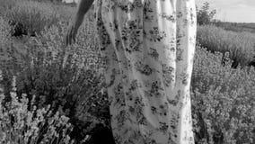 Schwarzes weißes Nahaufnahmebild ADN der jungen Frau im Kleid gehend am Lavendelfeld Lizenzfreies Stockfoto