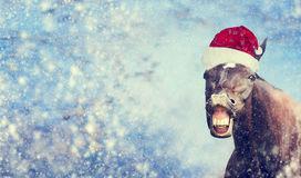 Schwarzes Weihnachtspferd mit Sankt-Hut lächelnd und Kamera auf Winterschneeflockenhintergrund, Fahne untersuchend, Lizenzfreie Stockfotografie