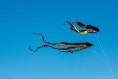 Schwarzmilane im Himmel lizenzfreies stockfoto