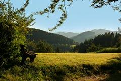 Schwarzwald/bosque negro Imagenes de archivo