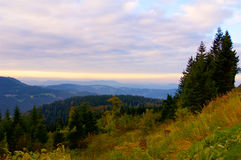 Schwarzwald Forest in Germany Royalty Free Stock Image