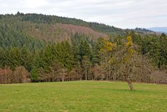 Schwarzwald landscape Stock Photos