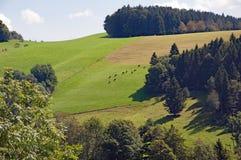 Schwarzwald w bavaria, Niemcy fotografia royalty free