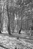 Schwarzweißaufnahme eines Waldes Stockfotos